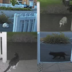 YouTube thumbnail showing four different cats captured by my Ring Doorbell