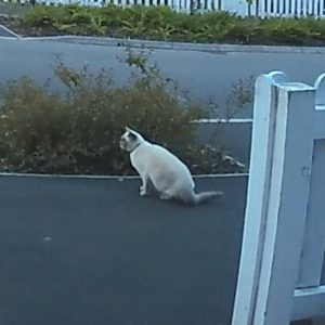 A cat captured during daytime on my Ring Doorbell Pro